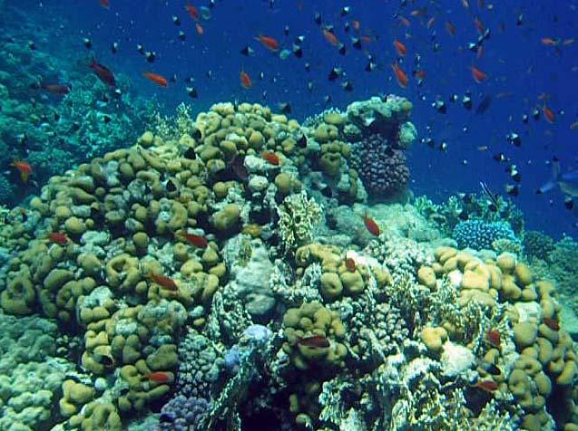 Liv i koralrevet ved Anemone City i Ras Mohamed
