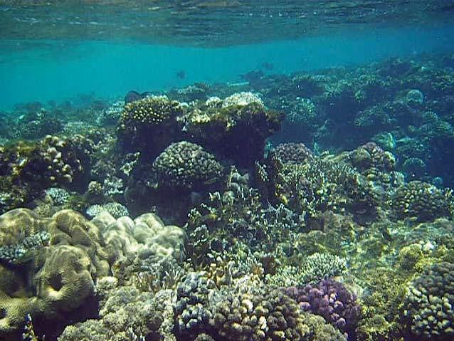 Koralrev i Sharm el Sheikh