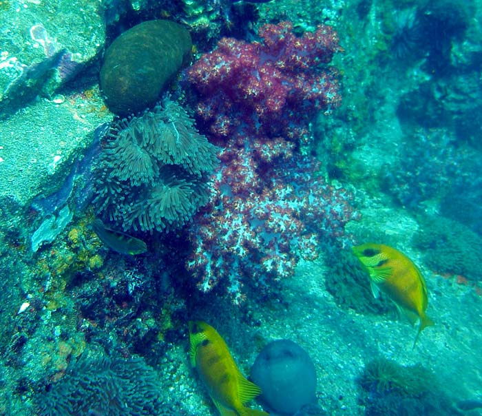 Tokong Laut ved Perhentian Islands