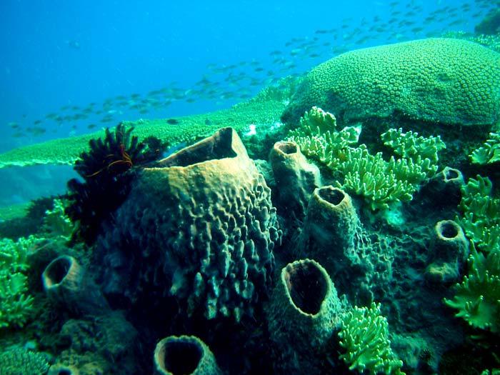 Tøndesvampe, søliljer og koraller