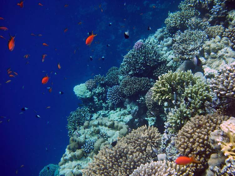 coral reefs essay