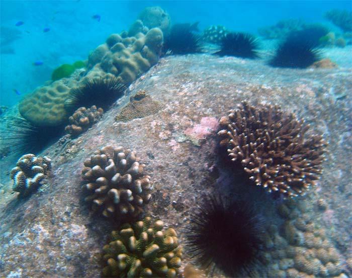 Flotte koraller ved Anse Lazio - Seychellerne