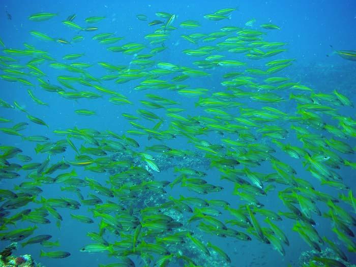 Fisk ved Sugar Ship Wreck