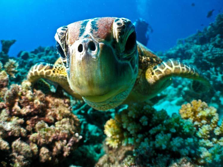 havskildpadder grækenland