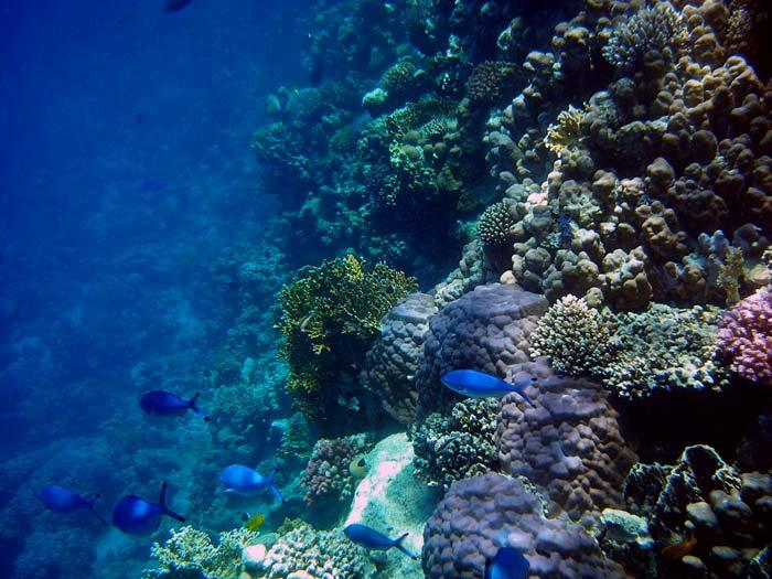 Smuk koralvæg i Sharm el Sheikh