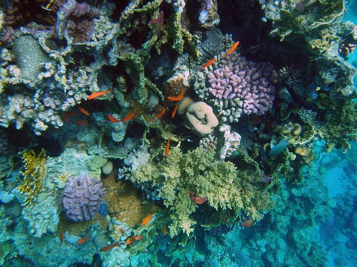 Koraller i Sharm el Sheikh