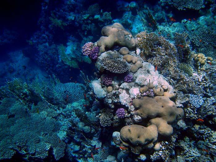 Koraller ved Jackfish Alley i Ras Mohamed