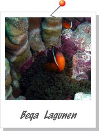 Beqa Lagunen - Foto Saspotato