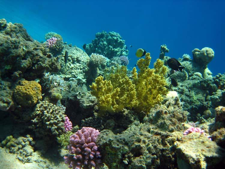 Koraller ved Golden Blocks i Dahab