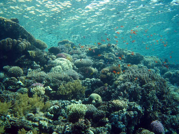 Flot koralvæg ved Blue Hole i Dahab