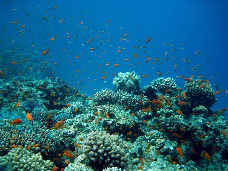 Fisk og koraller ved Ras Mamlah