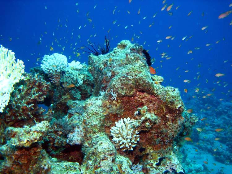 Koralrev ved Golden Blocks i Dahab