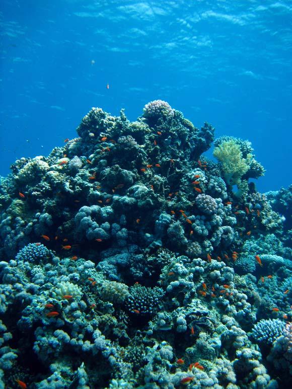 Koraller og fisk ved Blue Hole