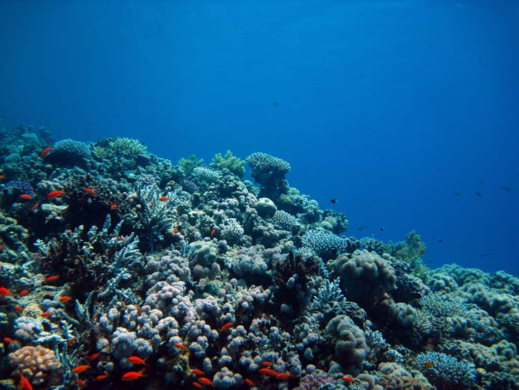 Koralrev ved Gabr el Bint