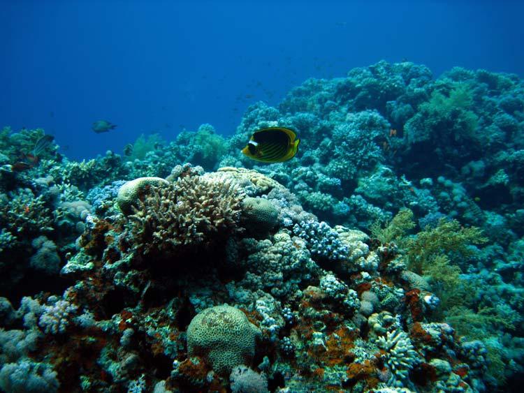 Fisk og koraller ved Blue Hole i Dahab