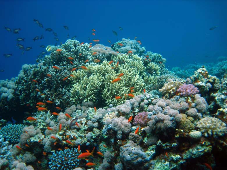 Koraller og fisk ved Blue Hole i Dahab