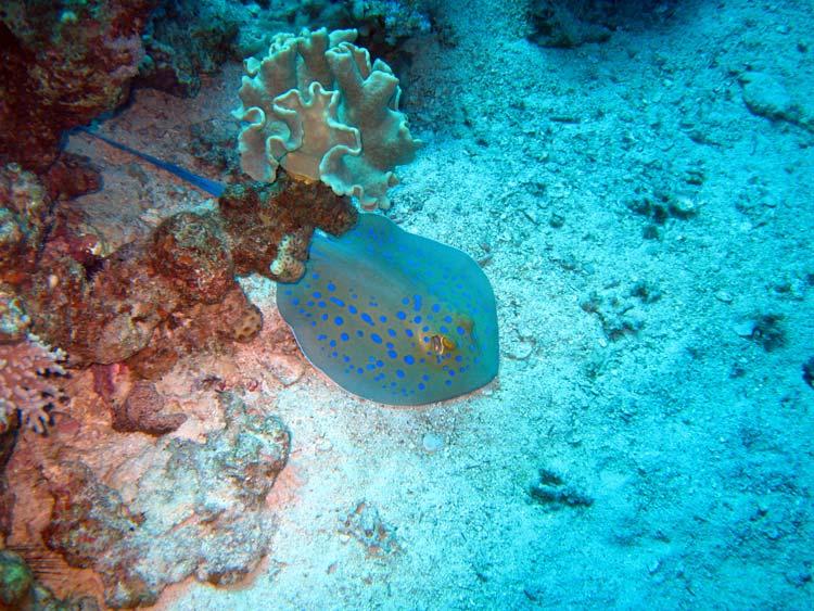 Pilrokke ved Mashraba Reef