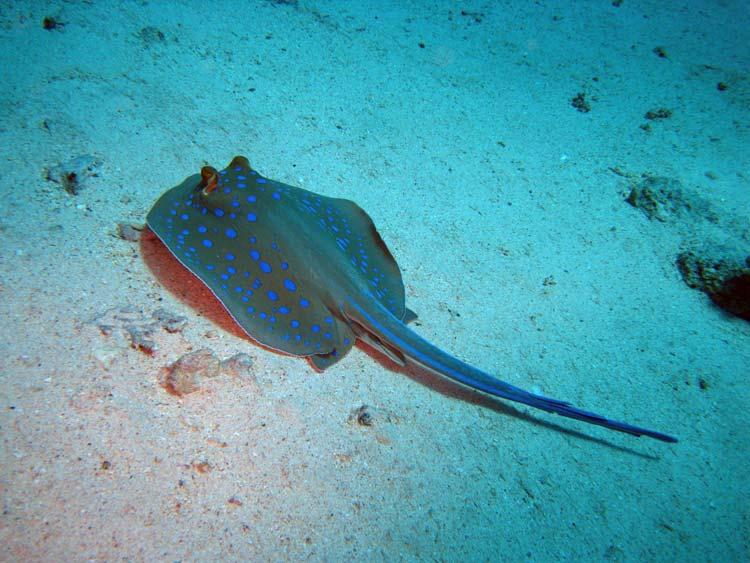 Pilrokke ved Yolanda Reef i Ras Mohammed