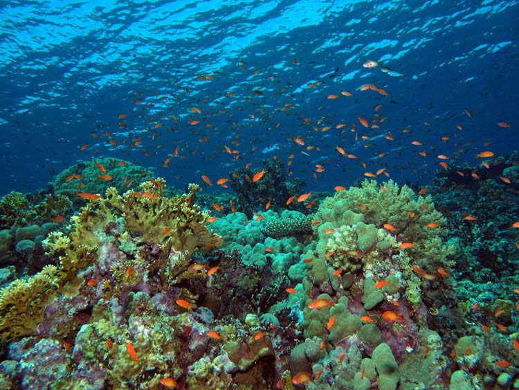 Fantastiske koraler ved Elphinstone Reef