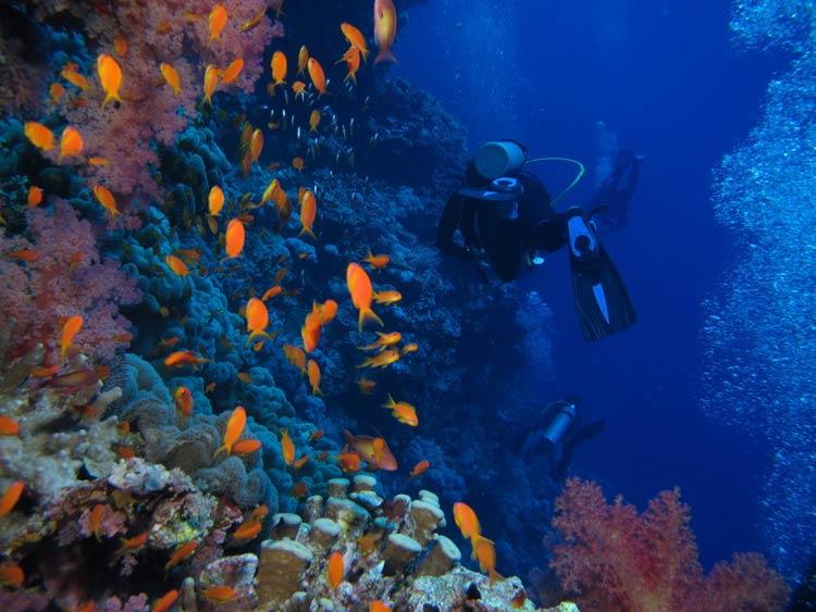 Fisk og koraller ved Elphinstone Reef