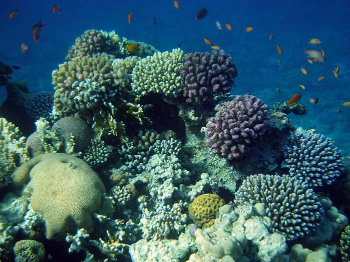 Smukke koraller ved Abu Galum