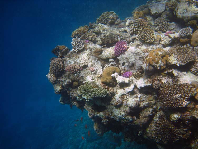 Lighthouse Reef i Dahab