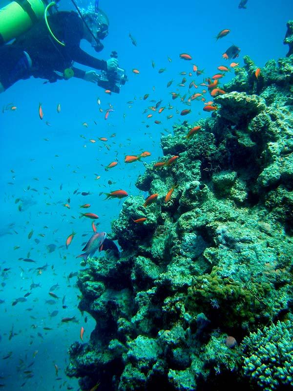 Dykker og fanebarser ved Golden Blocks
