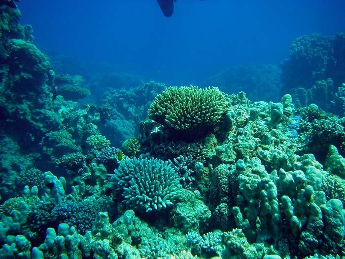 Flot koralrev ved The Islands