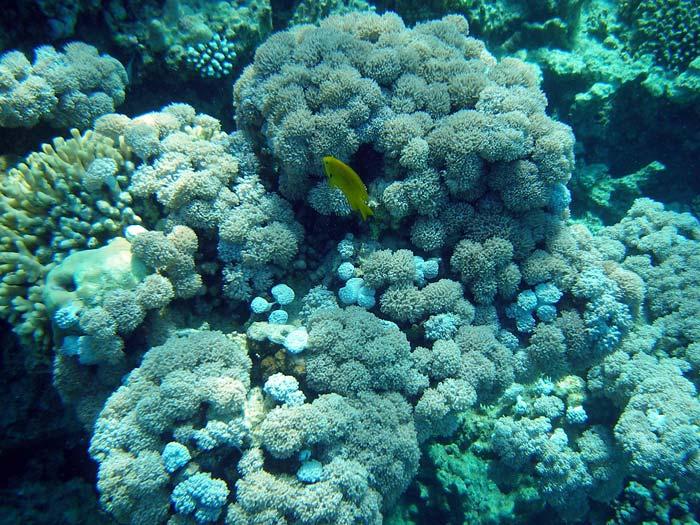 Flotte koraller ved The Islands