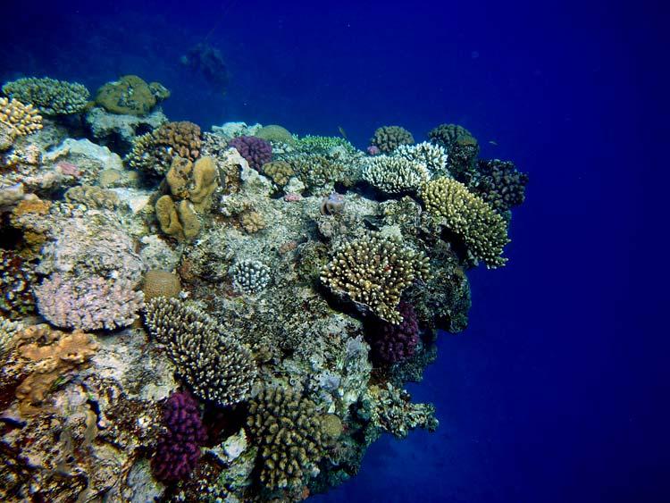 Spidsen af Lighthouse Reef i Dahab i Egypten
