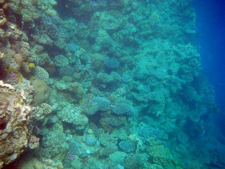 Flot koralvæg ved Lighthouse Reef i Dahab
