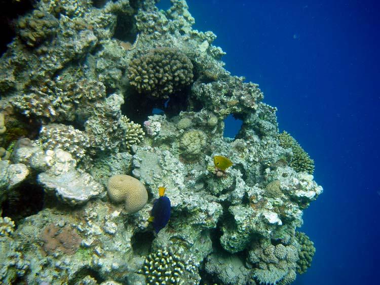 Koraller ved Lighthouse Reef i Dahab