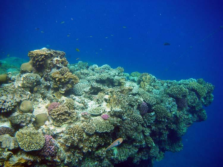 Den flotte spids af Lighthouse Reef i Dahab