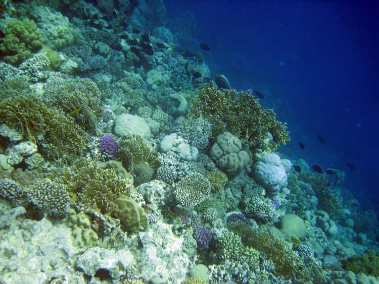 Mashraba reef i Dahab