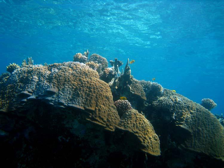 Enorme koralformationer ved Abu Helal