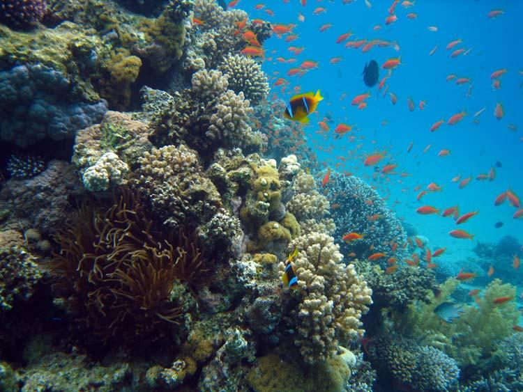 Smukt koralrev ved A'Maied i Ras Abu Galum