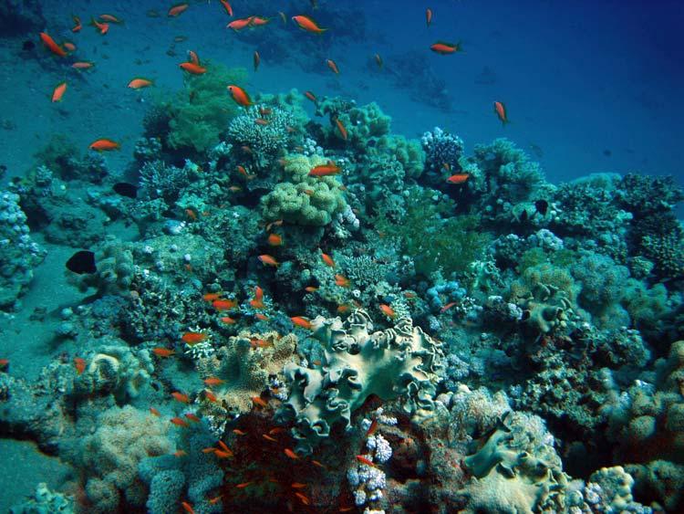Koraller og fisk ved Three Pools