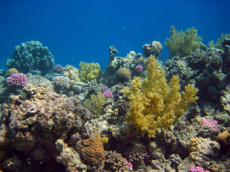 Smukt koralrev ved Three Pools