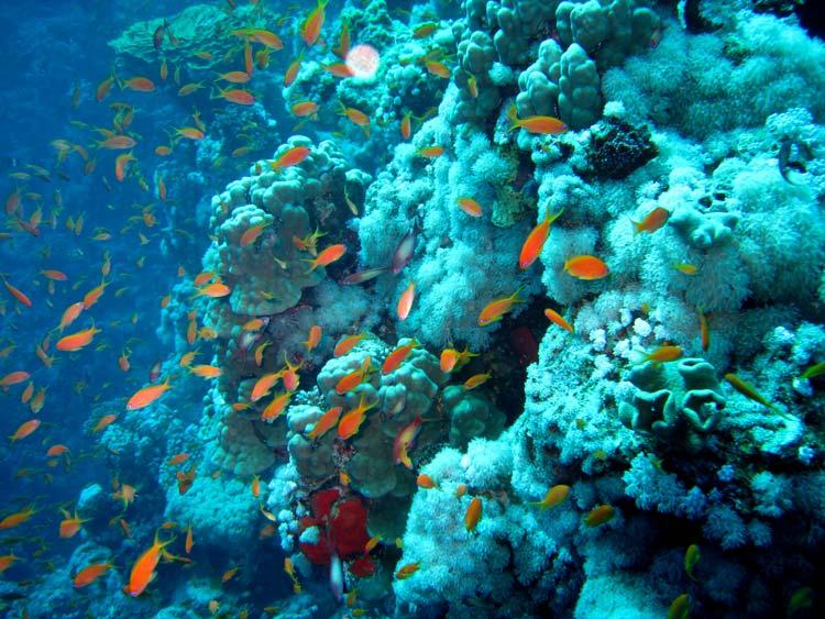Flot koralvæg ved The Bells