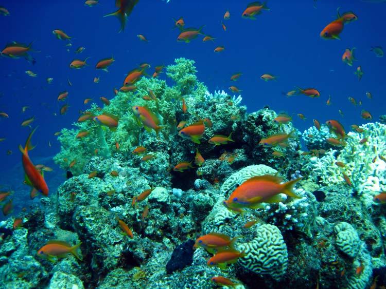 Koraller og fanebarser ved Golden Blocks
