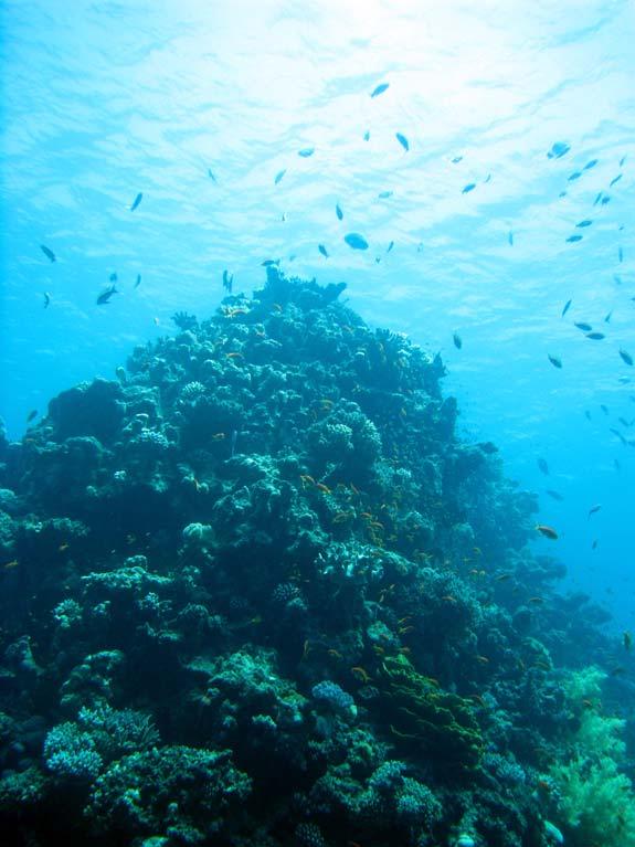 Stort koralbjerg ved Golden Blocks