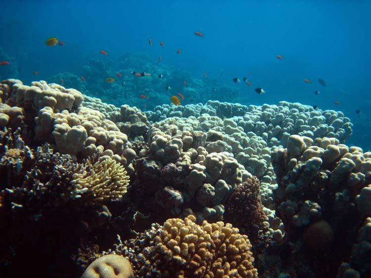 Koralrev ved The Islands