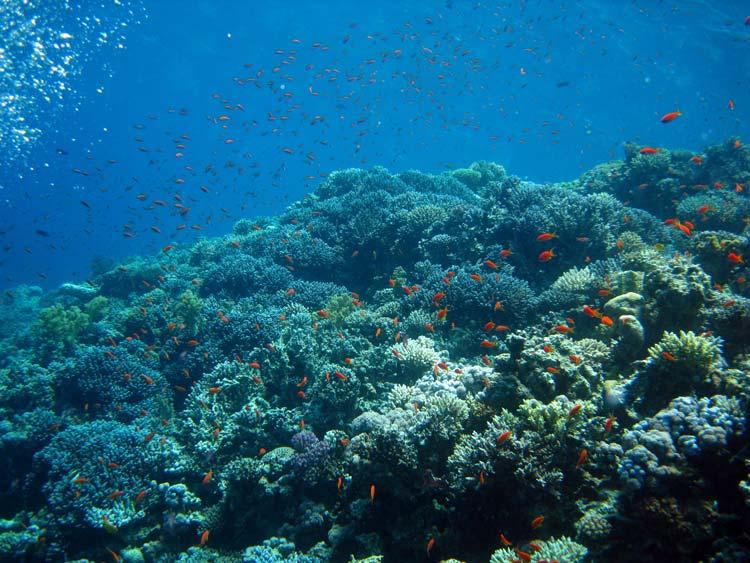 Flot koralvæg ved Blue Hole