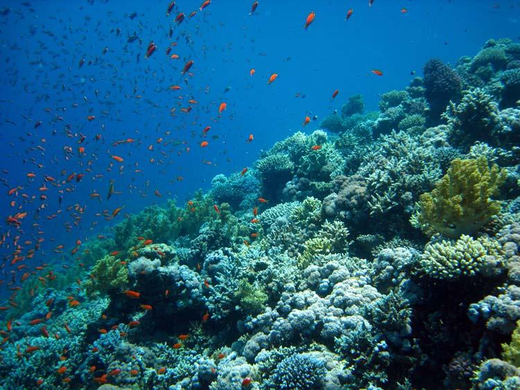 Flotte koraller ved Blue Hole i Dahab