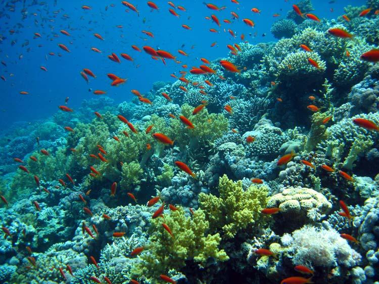 Smukke koraller ved Blue Hole