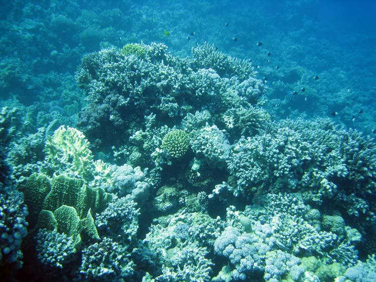 Koraller ved Abu Helal