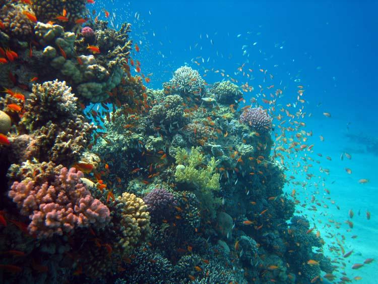 Fantastiske koraller ved A'Maied