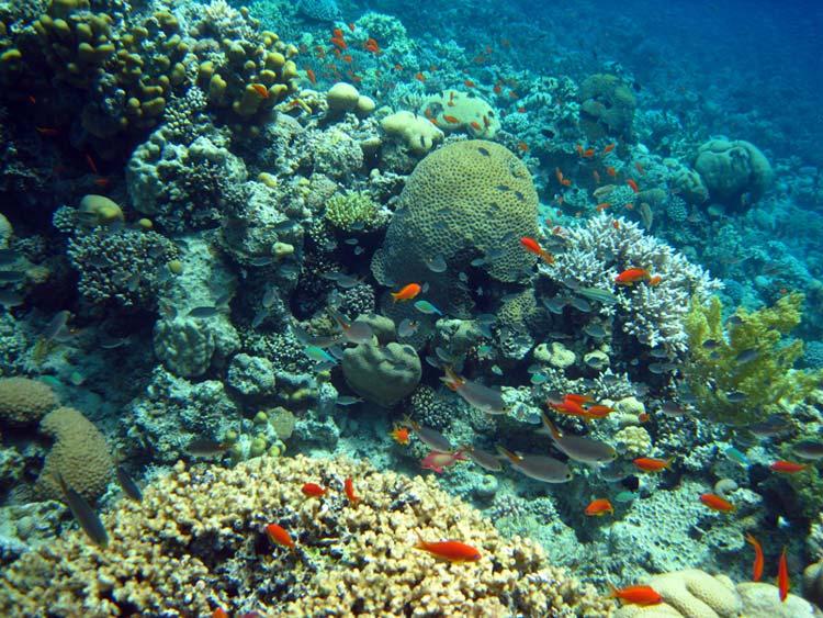 Smukt koralrev ved Ras Abu Galum