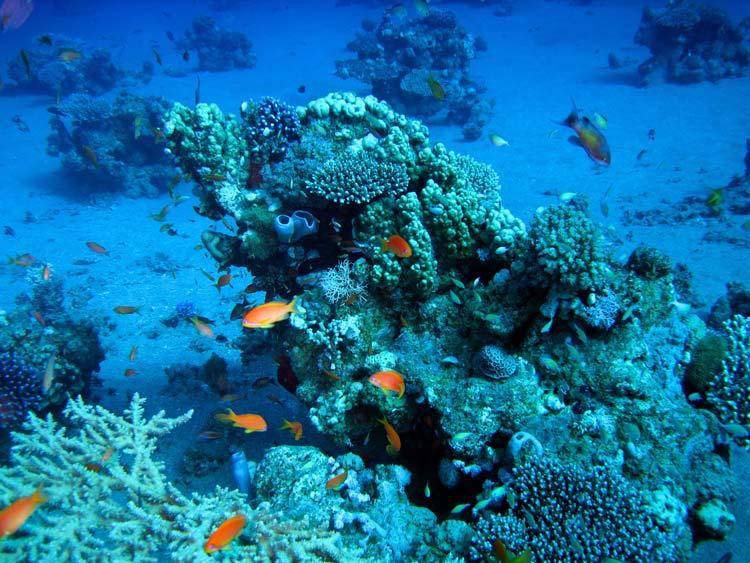 Koralrev ved Abu Galum
