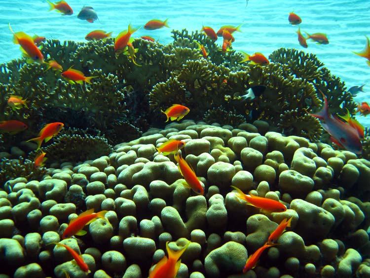 Koraller og fanebarser ved Eel Garden
